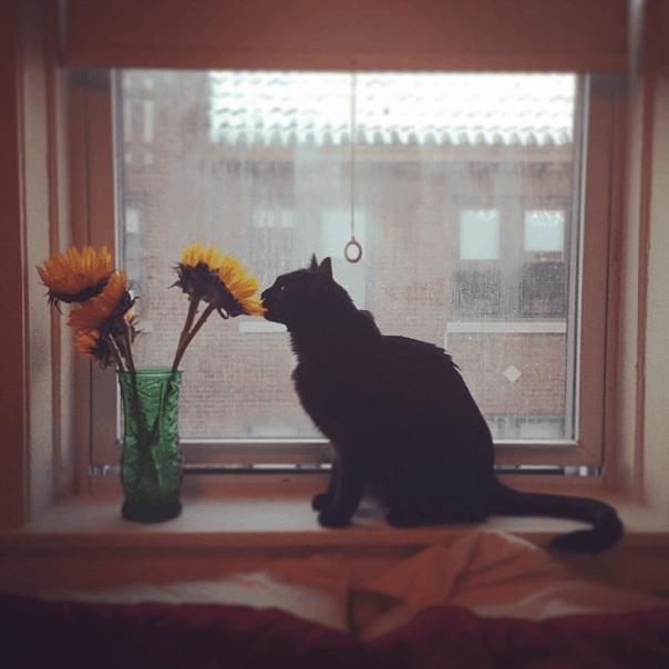 bert-cat