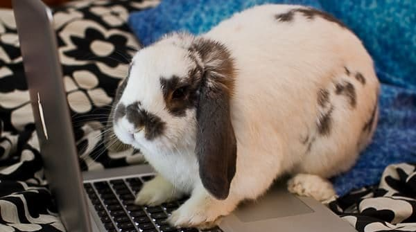 Gnocchi the bunny