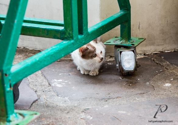 thai-tiny-kitten