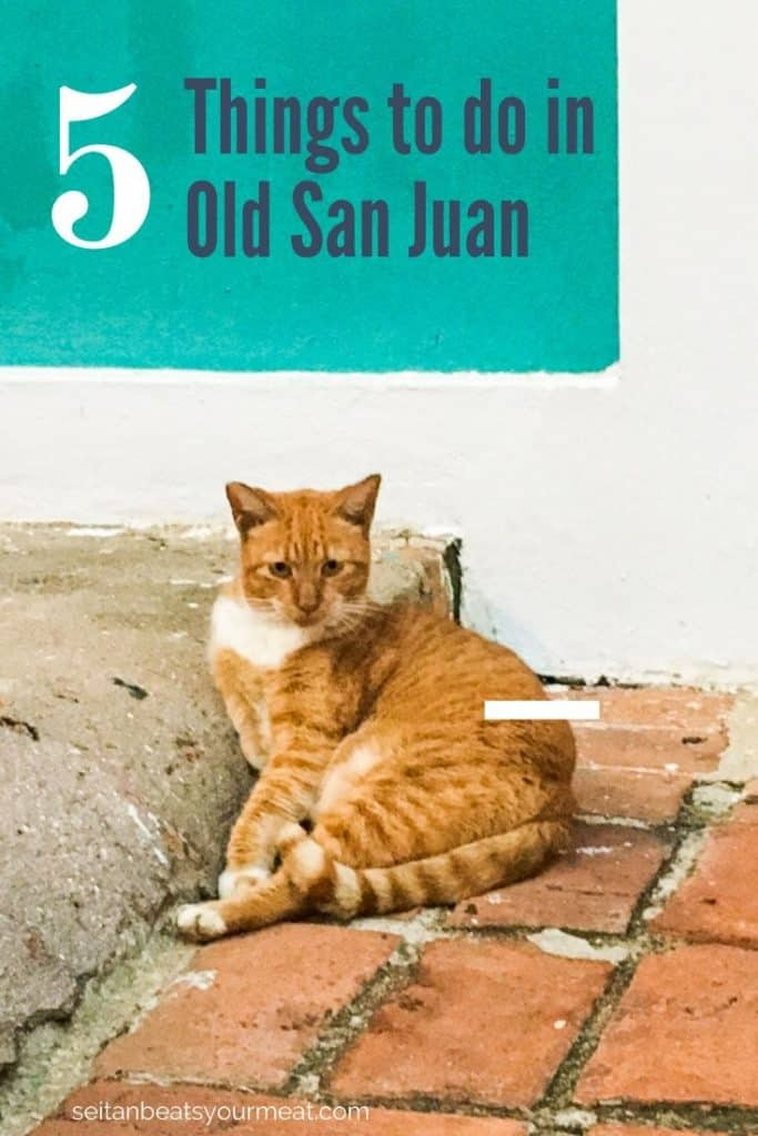 Cat in Old San Juan, PR