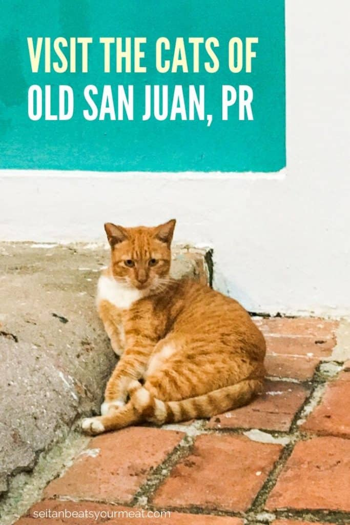 Orange cat on street in Old San Juan, PR