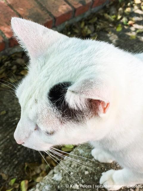 Cat in San Juan | Solo Travel in San Juan, Puerto Rico