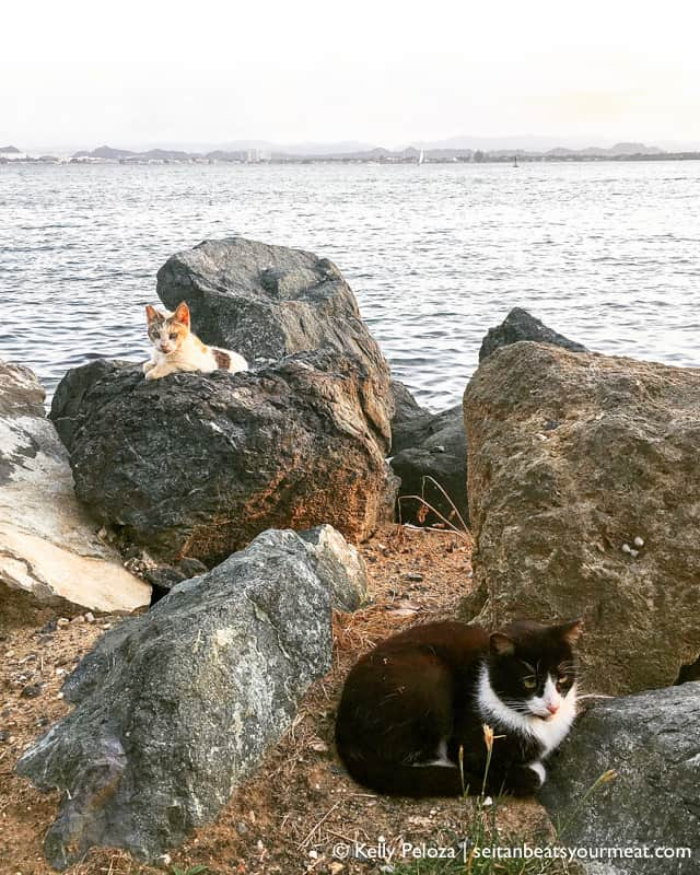 Cats on rocks by ocean in San Juan, Puerto Rico