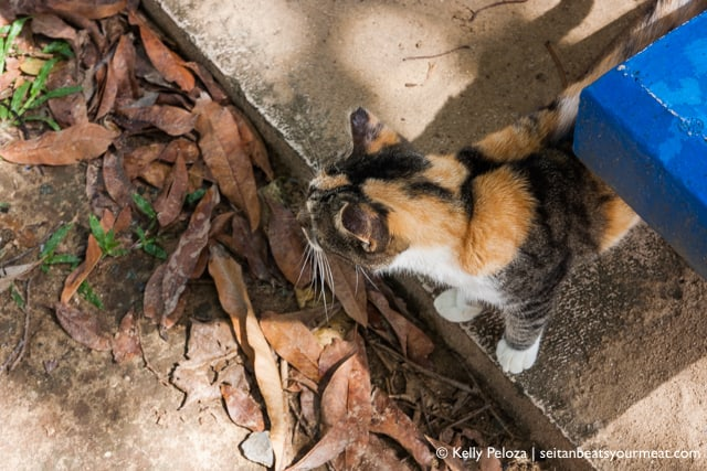 Save A Gato cats near El Morro | Read about my solo trip to Puerto Rico on Seitan Beats Your Meat