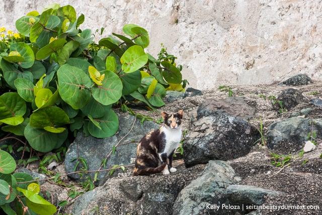 El Paseo del Morro | Solo trip to Puerto Rico on Seitan Beats Your Meat