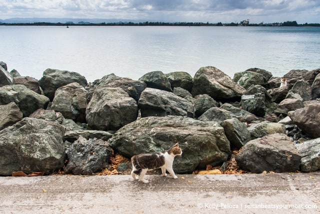 Cat on rocks at El Paseo del Morro in Old San Juan, Puerto Rico