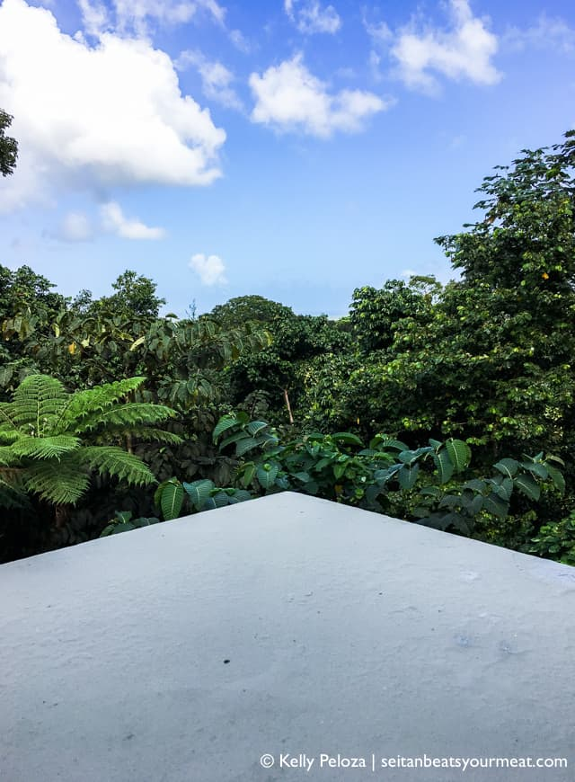 View of El Yunque Rainforest from visitor's center