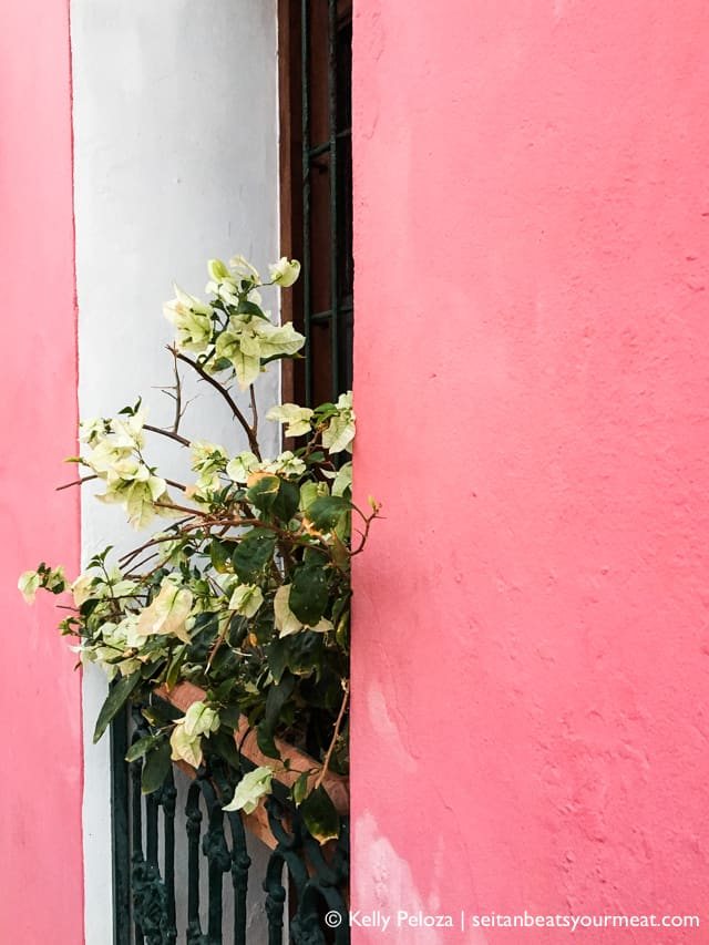 Pink building with white flowers in Old San Juan