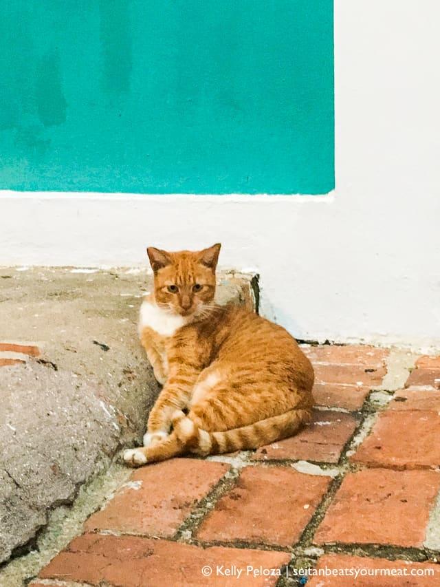Orange cat in Old San Juan
