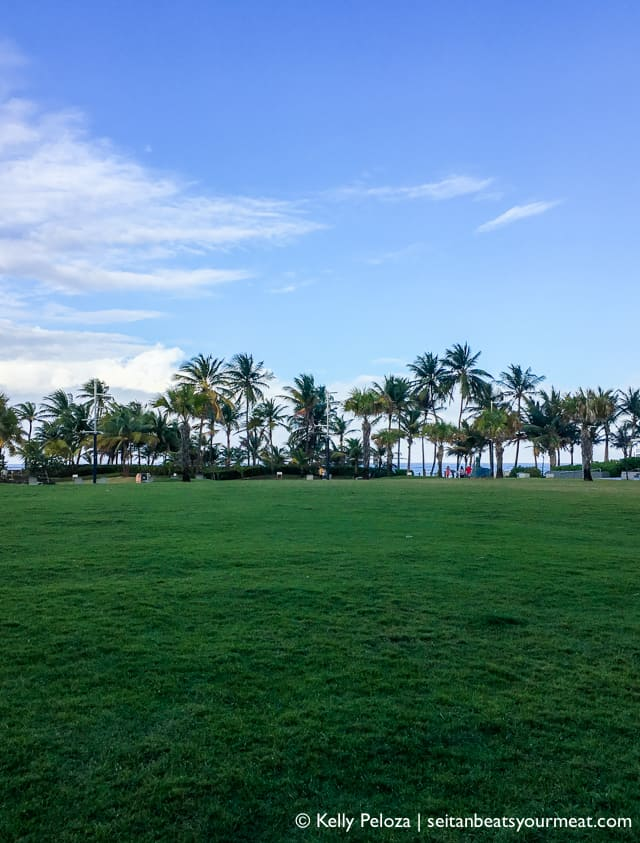 Palm trees, grass, and sky