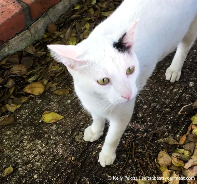 White cat with black ear on street