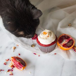 Cat sniffing red velvet cupcake with blood oranges