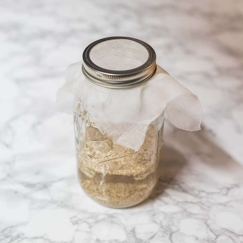 Quinoa in glass jar with water and cheesecloth in lid