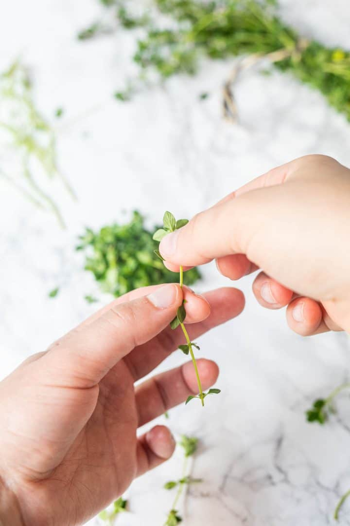 Hands removing thyme leaves from the stem